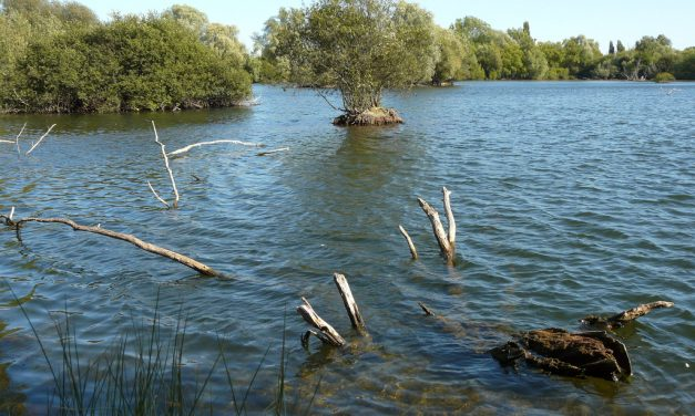 Leybourne Lakes Country Park, Kent