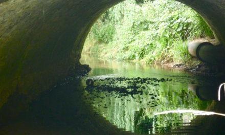 River Brue, Westhay, Nr. Glastonbury