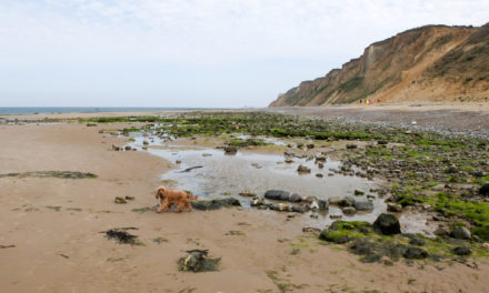 "East Runton, East Anglia<input type=""hidden"" class=""is-post-family-safe"" value=""true"">"