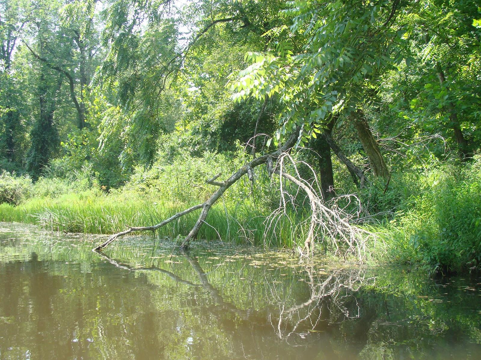 Oxford Circuit Canoe Trail